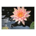 L'eau sereine Lily~print Impression Photographique