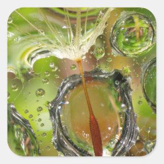 L'eau sur la graine de pissenlit, CA Sticker Carré