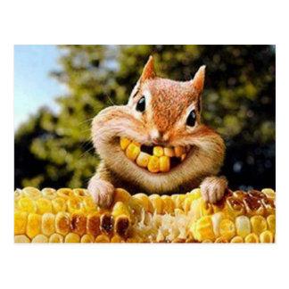 l'écureuil carte postale