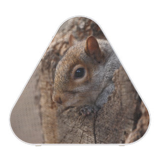 L'écureuil mignon regarde hors de son trou haut-parleur bluetooth
