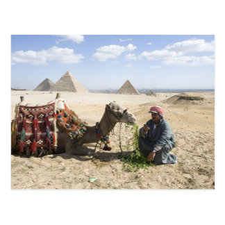 L'Egypte, Gizeh. L'homme indigène charge son Carte Postale