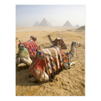L'Egypte, le Caire. Regard fixe de repos de Cartes Postales