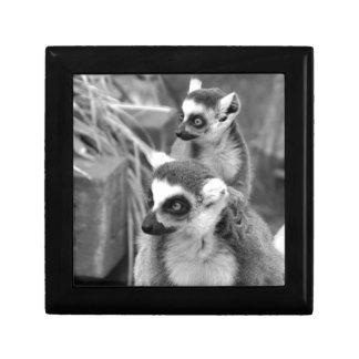 lémur Anneau-coupé la queue avec le bébé noir et Petite Boîte À Bijoux Carrée