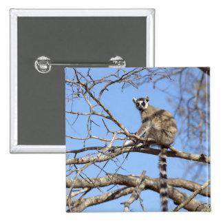 lémur Anneau-coupé la queue (catta de lémur) chauf Badge