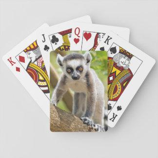 Lémur anneau-coupé la queue par bébé jeu de cartes