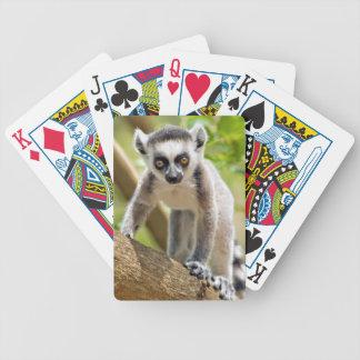 Lémur anneau-coupé la queue par bébé jeu de poker