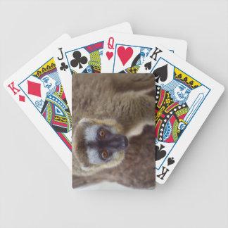 Lémur de Brown (fulvus d'Eulemur) dans la forêt Jeux De Cartes