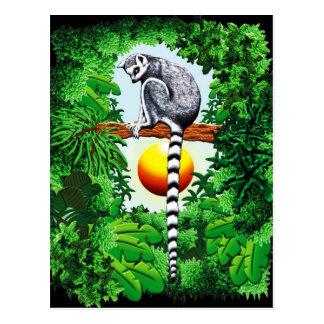 Lémur du Madagascar Carte Postale
