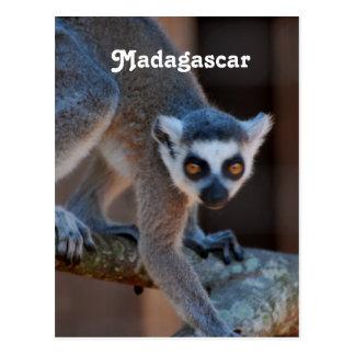 Lémur du Madagascar Cartes Postales