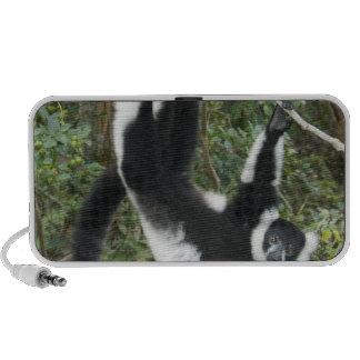 Lémur noir et blanc de Ruffed, (Varecia Haut-parleur Mp3