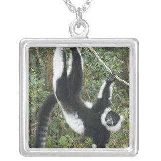 Lémur noir et blanc de Ruffed, (Varecia Pendentif Carré