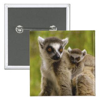 lémurs Anneau-coupés la queue (catta de lémur) mèr Pin's