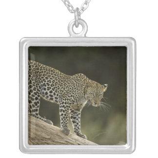 Léopard africain, pardus de Panthera, dans un Pendentif Carré