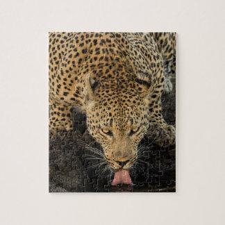 Léopard buvant, Afrique du Sud Puzzle