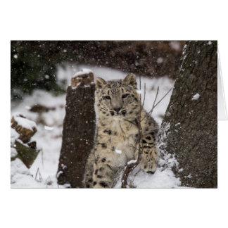 Léopard de neige CUB Carte De Vœux
