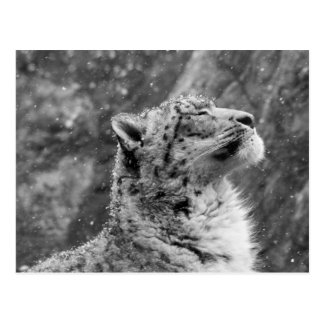 Léopard de neige paisible carte postale