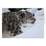 Léopard de neige sur le vagabondage cartes de vœux