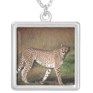 Léopard en plaine collier