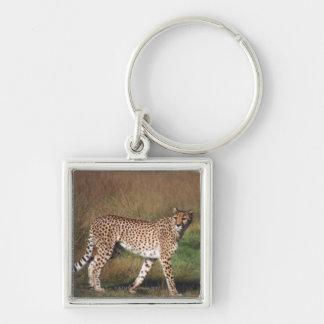Léopard en plaine porte-clef