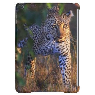 Léopard (Panthera Pardus) comme vu dans le masai