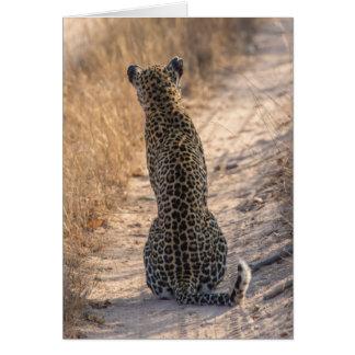 Léopard se reposant dans la route, Afrique Carte De Vœux