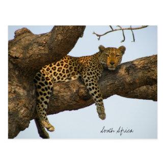 Léopard se reposant dans un arbre carte postale