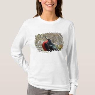 L'Equateur, Galapagos, Seymour du nord. Grand T-shirt