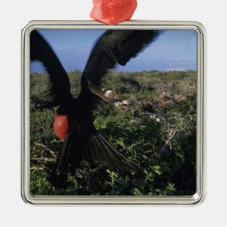 L'Equateur, îles de Galapagos, magnifiques Ornement Carré Argenté