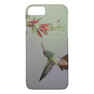 L'Equateur, loge d'oiseau de Tandayapa. Coque iPhone 7