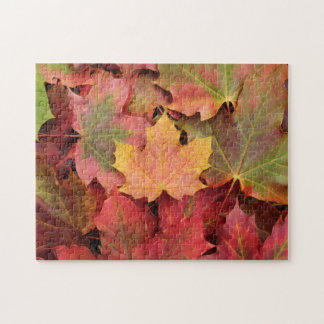 L'érable d'automne part du puzzle denteux