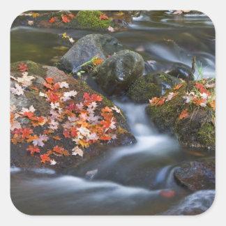 L'érable rouge laisse à tapis les roches dans sticker carré