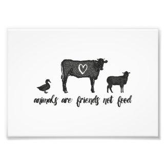 les animaux sont copie de nourriture d'amis pas impression photo