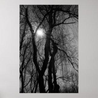 Les arbres en silhouette Sun rayonne noir et blanc Affiches