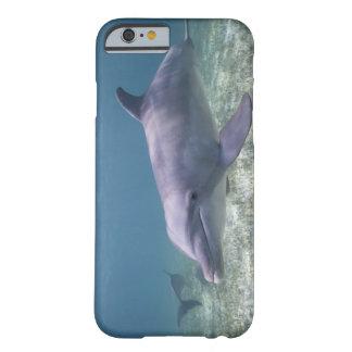 Les Bahamas, île de Bahama grande, port franc, Coque iPhone 6 Barely There