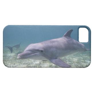 Les Bahamas, île de Bahama grande, port franc, Étuis iPhone 5