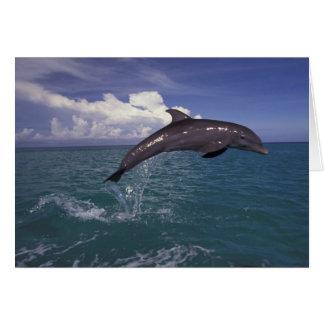 Les Caraïbe, Tursiops 2 de dauphin de Bottlenose Carte De Vœux