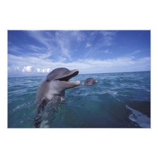 Les Caraïbe, Tursiops 2 de dauphins de Bottlenose Photo D'art