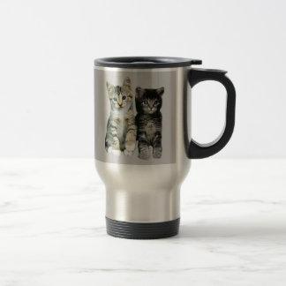 Les chatons autour ici des chats sont tasse