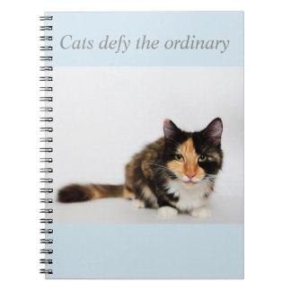 """Les """"chats défient"""" le carnet ordinaire de Phoebe"""