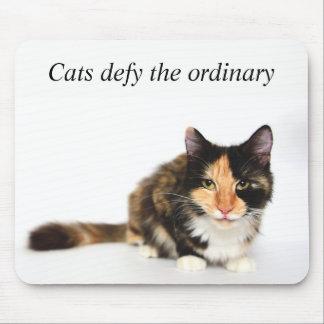 """Les """"chats défient"""" le tapis de souris ordinaire"""