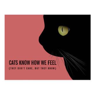 Les chats savent nous sentons la carte postale