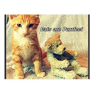 Les chats sont carte postale de Purrfect