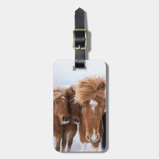 Les chevaux islandais poussent du nez, l'Islande Étiquette Pour Bagages