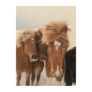 Les chevaux islandais poussent du nez, l'Islande Impression Sur Bois
