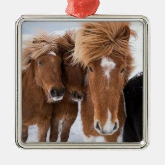 Les chevaux islandais poussent du nez, l'Islande Ornement Carré Argenté