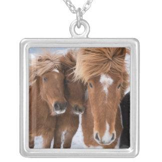 Les chevaux islandais poussent du nez, l'Islande Pendentif Carré