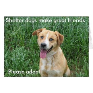 Les chiens d'abri font les grands amis 7703 carte de vœux