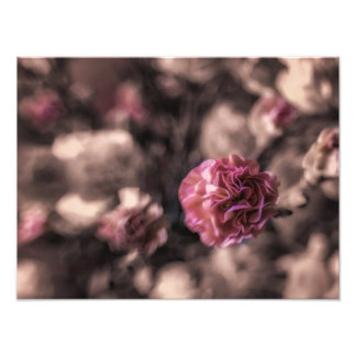 Les copies de douceur antiqued les oeillets roses impression photo