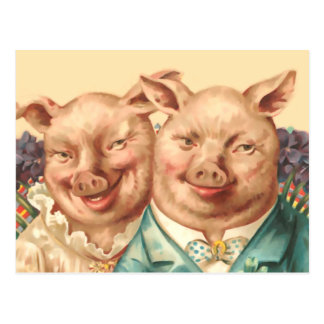 Les couples beaux de porc carte postale