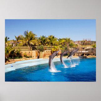 Les dauphins sautant au monde marin d'Ushaka, Poster